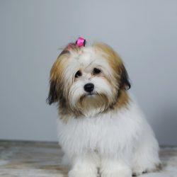 Winnie-Condry